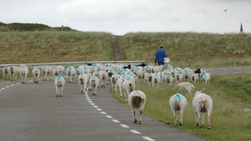 Zo Texels
