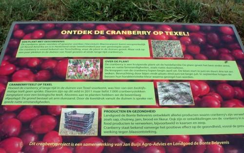 65-Ontdek-de-Cranberry